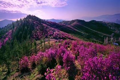 紫云岭森林公园