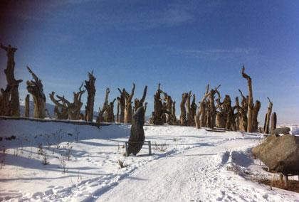 南山阳光sport滑雪场