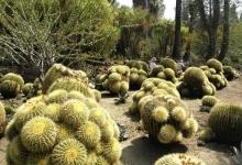 沙漠植物园