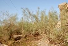 沙漠植物风情园