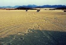 临湘江南大漠
