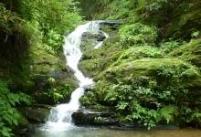 大板水国家森林公园
