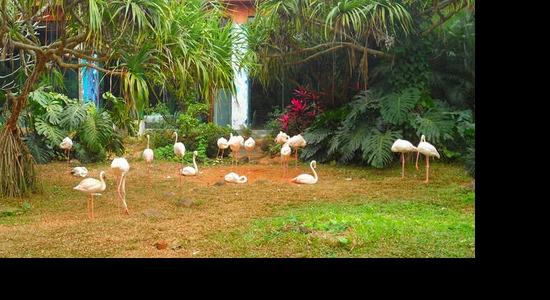 热带野生动植物园