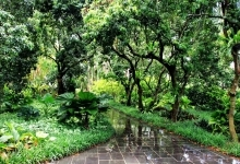 海南热带植物园